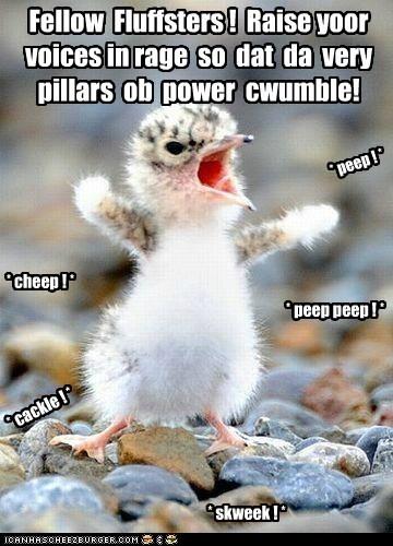 rage birds baby birds tiny fluff yelling revolution power - 6894639104