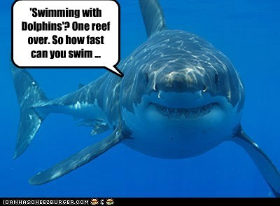 dolphins chasing swimming fast wrong sharks eating you - 6894742272