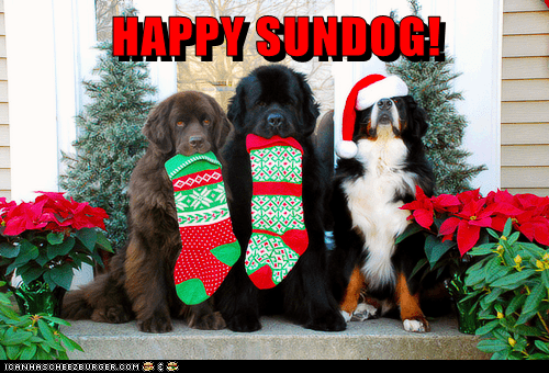 christmas dogs stockings Sundog holidays mastiffs - 6895037952