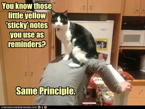 post-it notes hungry captions feed dinner sit sticky notes back fridge Cats - 6895059968