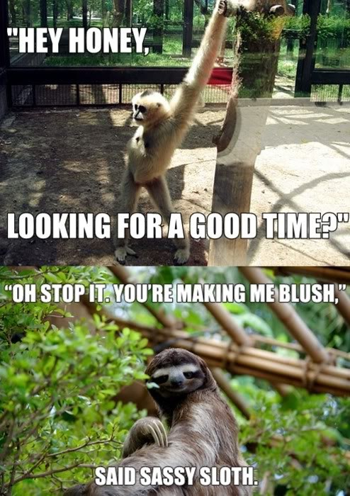 sassy sloth,good time,wants your body