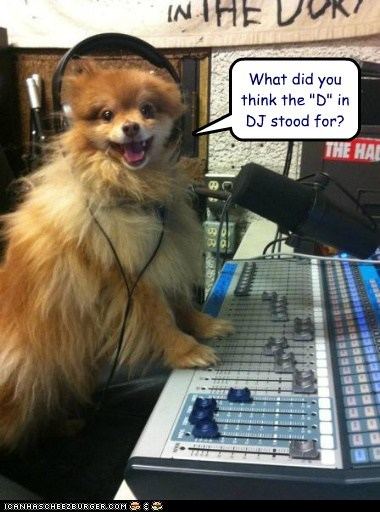 pomeranian radio dj dogs headphones smile