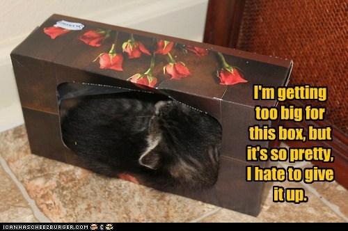 box origami captions kleenex Cats tissue box - 6895748096