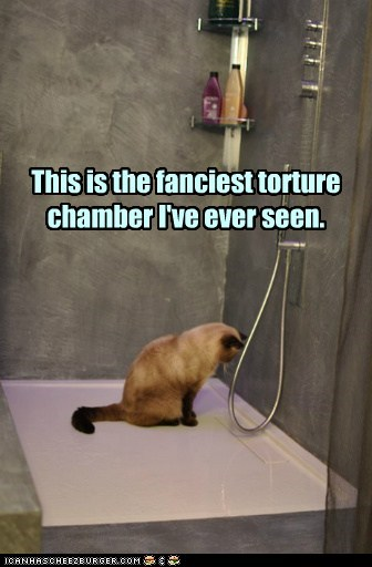 fancy captions shower bath bathroom torture Cats - 6895782656