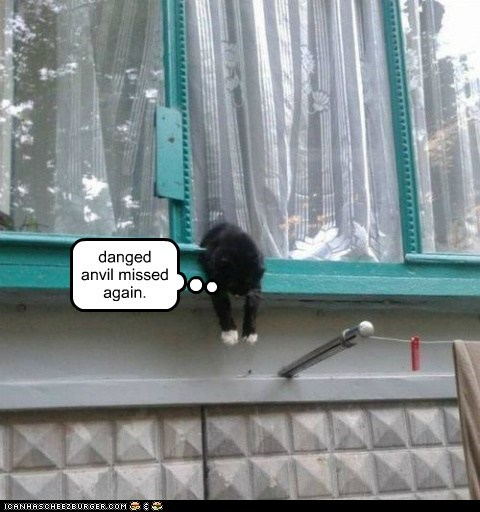 anvil captions push Cats window - 6896382464