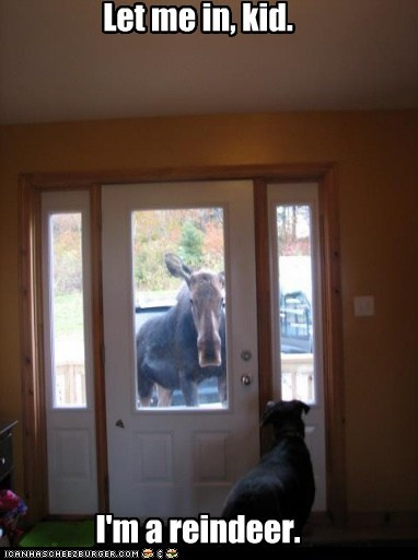 dogs,reindeer,let me in,deception,lying,rudolf,moose