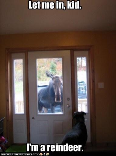 reindeer let me in lying moose - 6896398592