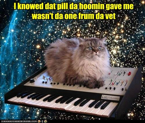 drugs captions vet Cats space keyboard - 6897054720