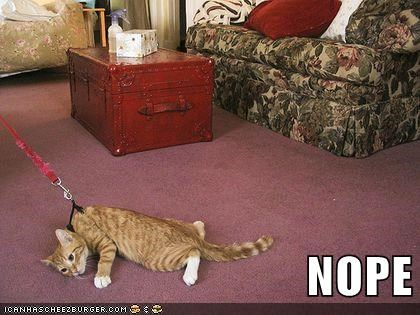 leash nope captions walk Cats carpet - 6897305600