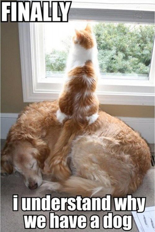 dogs,Staring,on top,Interspecies Love,captions,windows,ladders,stools,Cats