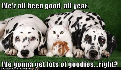 We'z all been good, all year. We gonna get lots of goodies...right?