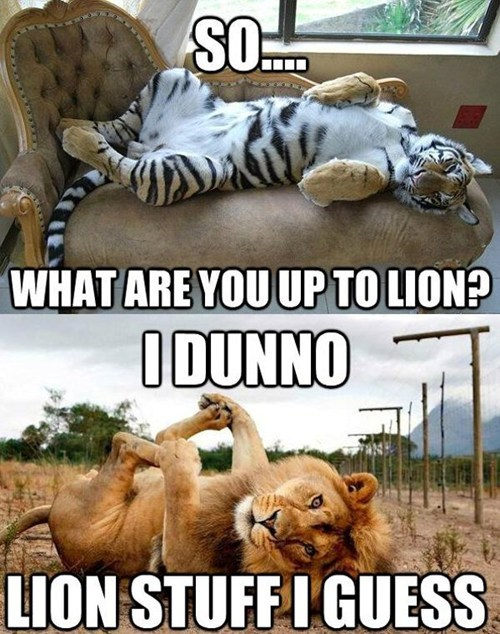whatcha doin,lions,tigers,captions,whatcha thinkin about,multipanel