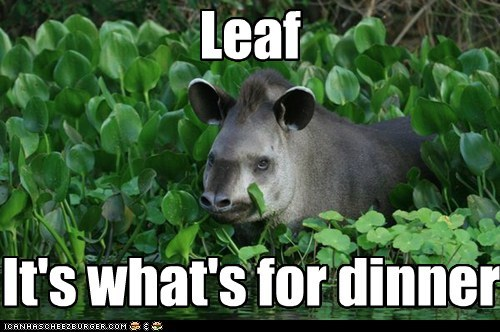 breakfast,tapirs,leaf,dinner,food,leaves