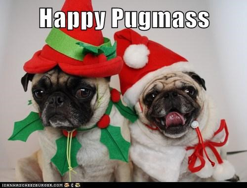 christmas dogs pugs costume elves holidays - 6898011136