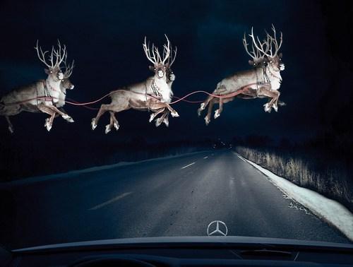 christmas reindeer santa funny holidays - 6898018816