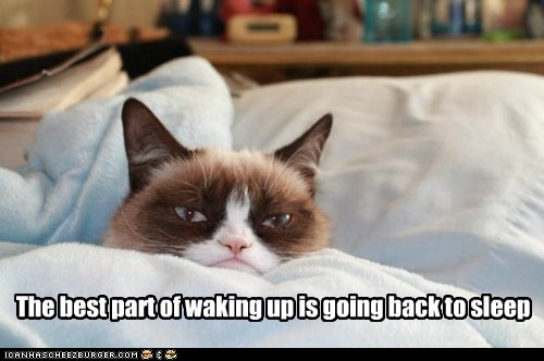 tardar sauce captions morning sleep Grumpy Cat Cats - 6898060544