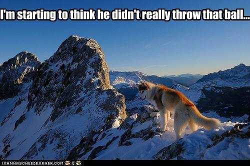 fetch,dogs,snow,husky,ball,huskie,suspicious dog,mountains