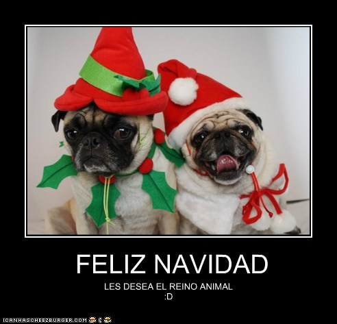 feliz navidad i has a hotdog dog pictures funny pictures of dogs dog memes puppy pictures doge dogs dog memes puppy pictures doge