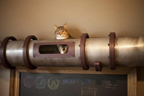 cat pets design - 6898582272