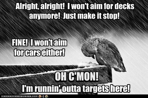 poop birds targets decks aim cars shame alright - 6898629120
