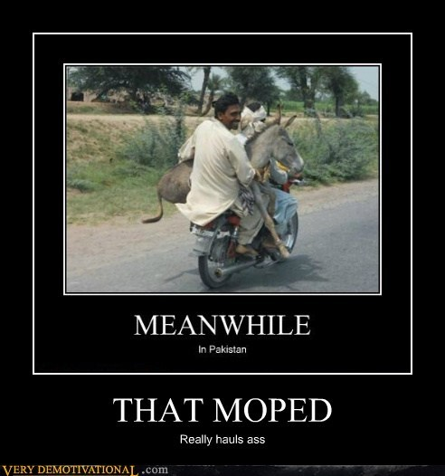 moped wtf awesome donkey - 6898652672