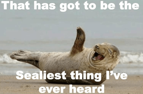 silliest,seal,similar sounding,laughing