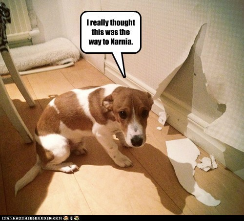 wallpaper in trouble sad dog sorry what breed narnia - 6899355904