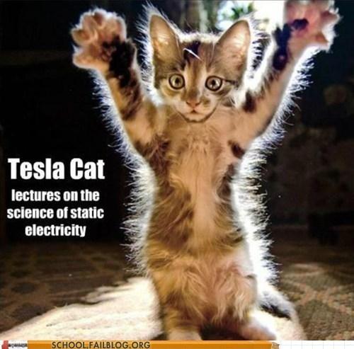 cat,Nikola Tesla,electricity