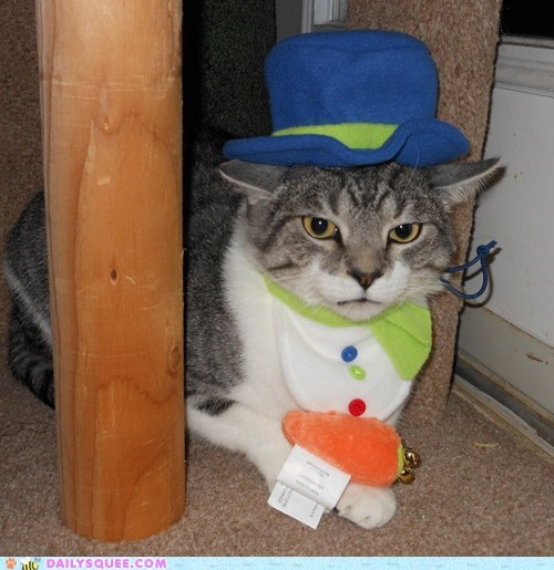 costume,reader squee,pets,frosty the snowman,Cats,squee,holidays