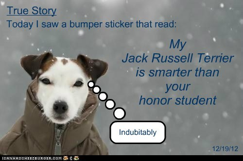 Today I saw a bumper sticker that read: My Jack Russell Terrier is smarter than your honor student Indubitably True Story 12/19/12