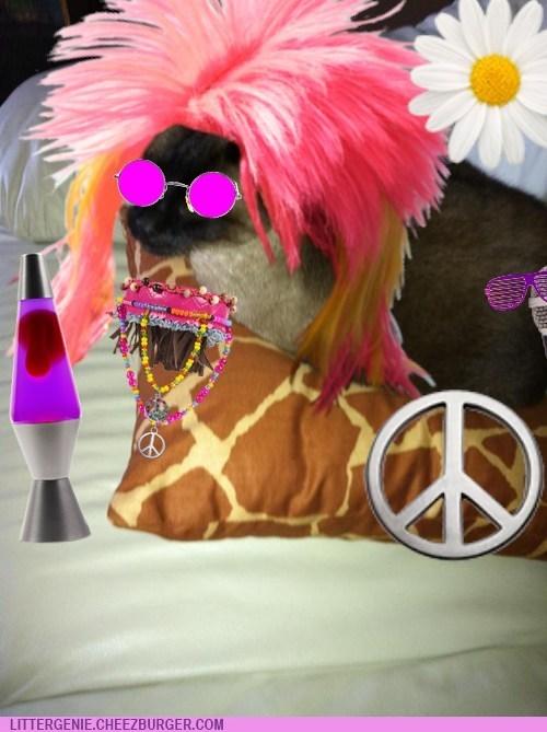 Cheezburger Image 6899645184