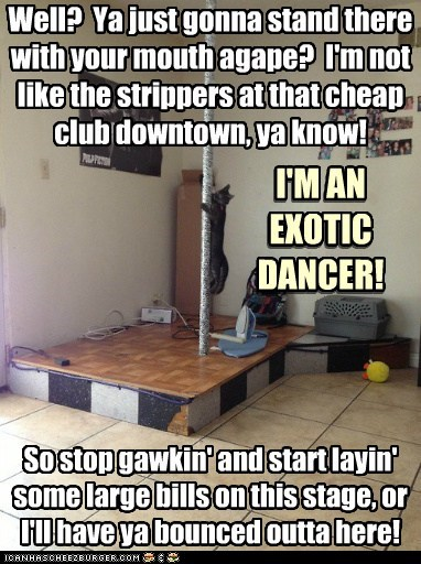 stripper club pole captions exotic dancer pole dance Cats - 6899865088