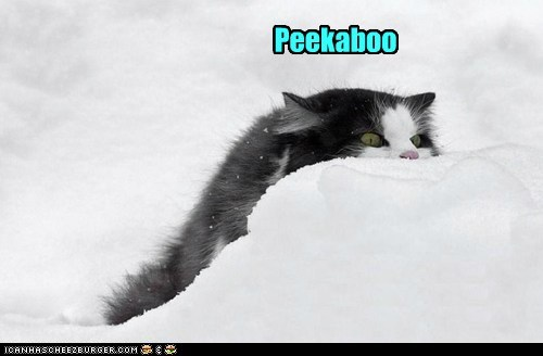 peekaboo snowball snow captions winter Cats - 6899895296