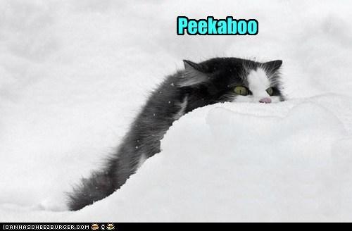 peekaboo snowball snow captions winter Cats - 6899895296