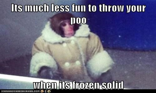 ikea monkey,throwing poop,no fun,monkey,frozen