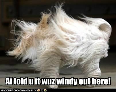 Ai told u it wuz windy out here!