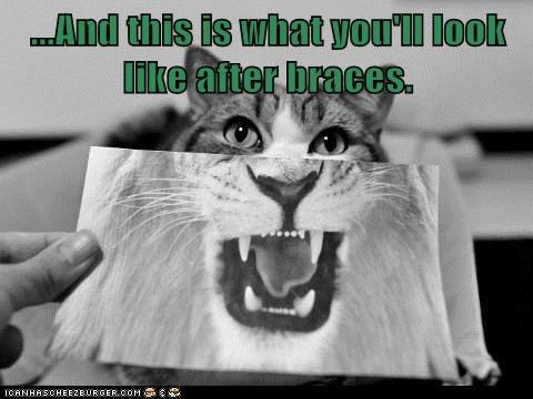 braces dentist teeth captions lion Cats - 6900505856