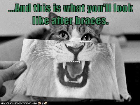 braces dentist teeth captions lion Cats - 6900505856