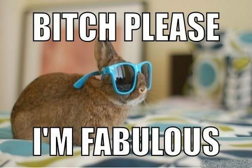 bunnies,sunglasses,rabbits
