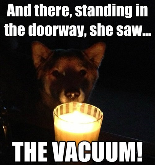 dogs scary stories candle ghost stories shiba inu vacuum