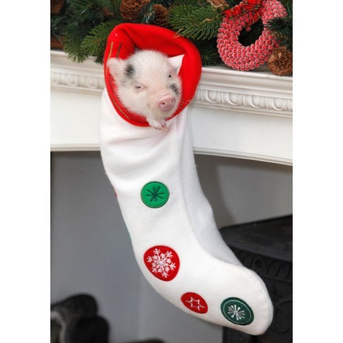 christmas stocking stuffers pig piglet squee holidays - 6901223168