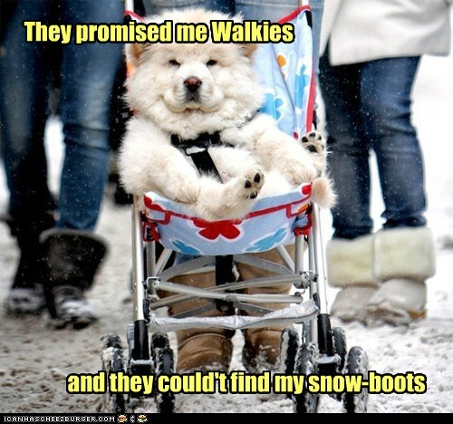 dogs chow chow snow walks Fluffy stroller spoiled - 6901486080