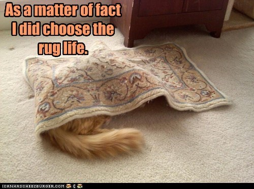 As a matter of fact I did choose the rug life.