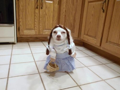 wizard of oz,dogs,Dorothy