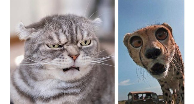 animals making facial expressions for every mood