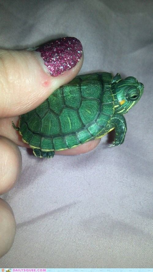 reader squee,pets,tiny,shell,turtle,squee