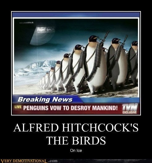 birds penguins ice - 6902736384