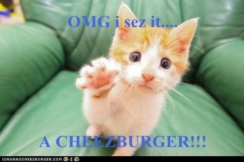 Cheezburger Image 6903296768