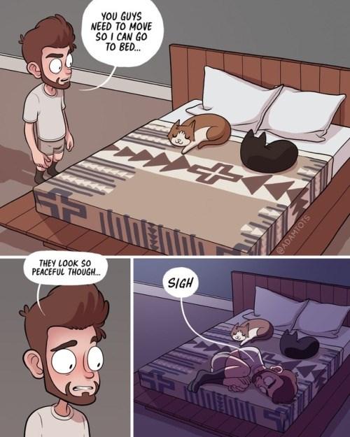 everyday Cats funny web comics - 6905861