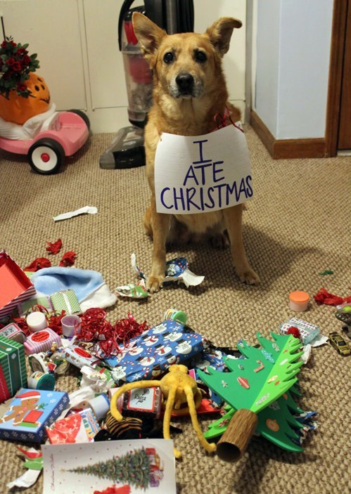 christmas dogs naughty destruction signs dog shaming - 6905918464